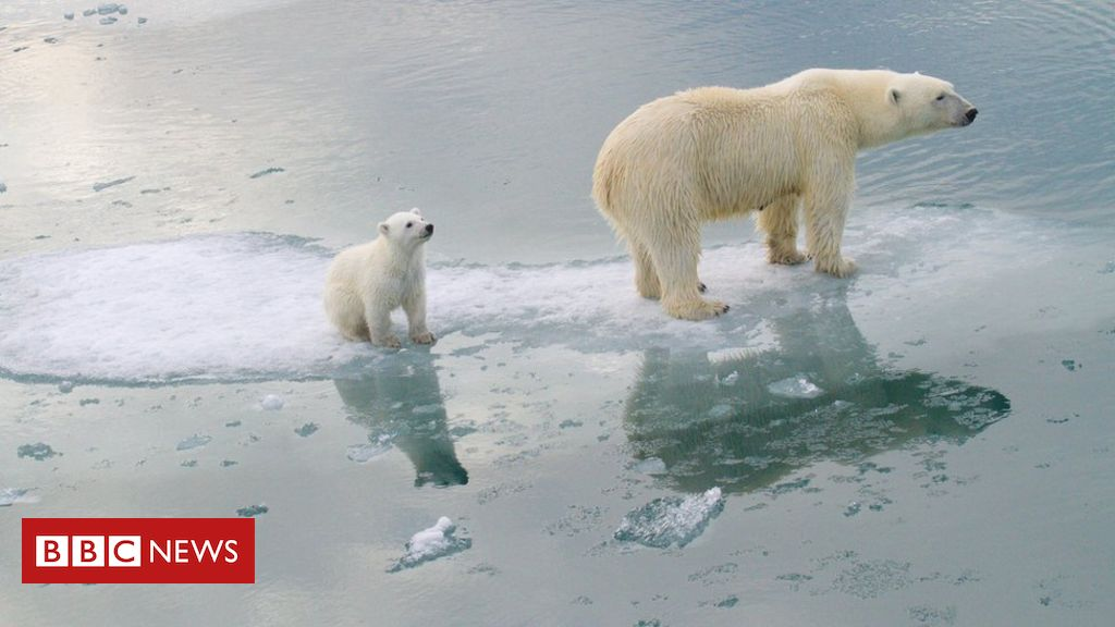 Photo of Climate change: Polar bears could be lost by 2100