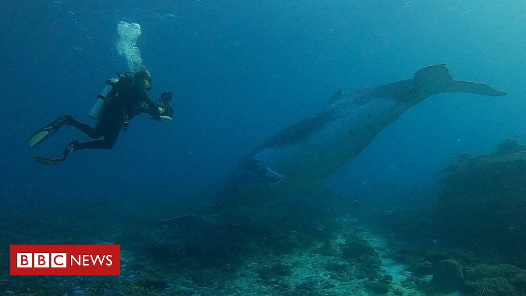Photo of Whale migration: Super rare whale encounter on the Great Barrier Reef