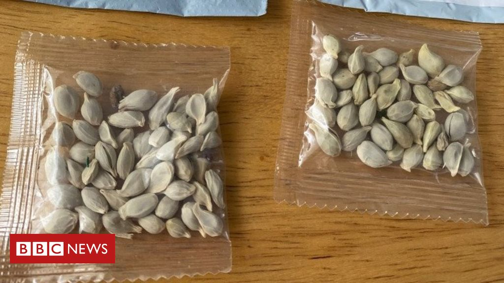 Photo of Mystery seeds: Amazon bans foreign plant sales in US