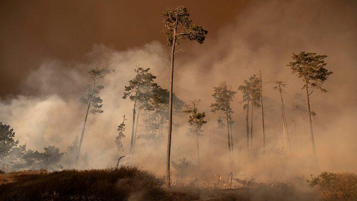 Photo of US West Coast fires: Smoke spreads to New York and Washington