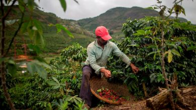 Photo of Coffee prices set to soar due to Brazil's bad weather